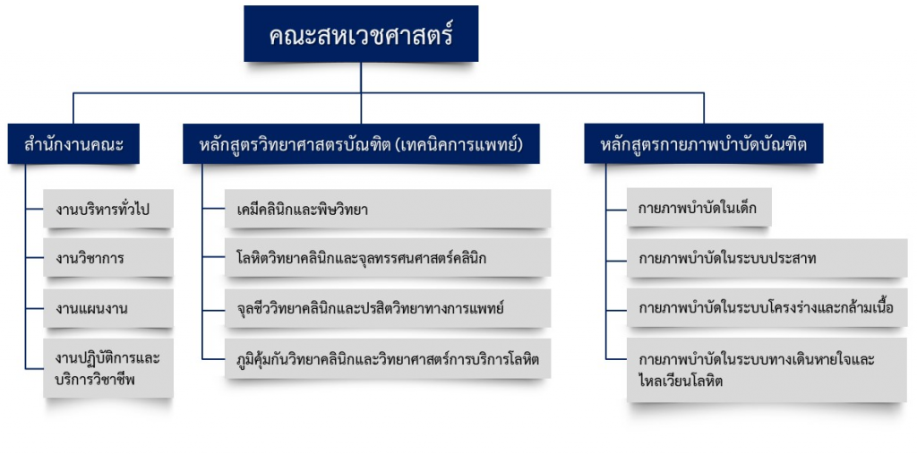 organization-chart-2020